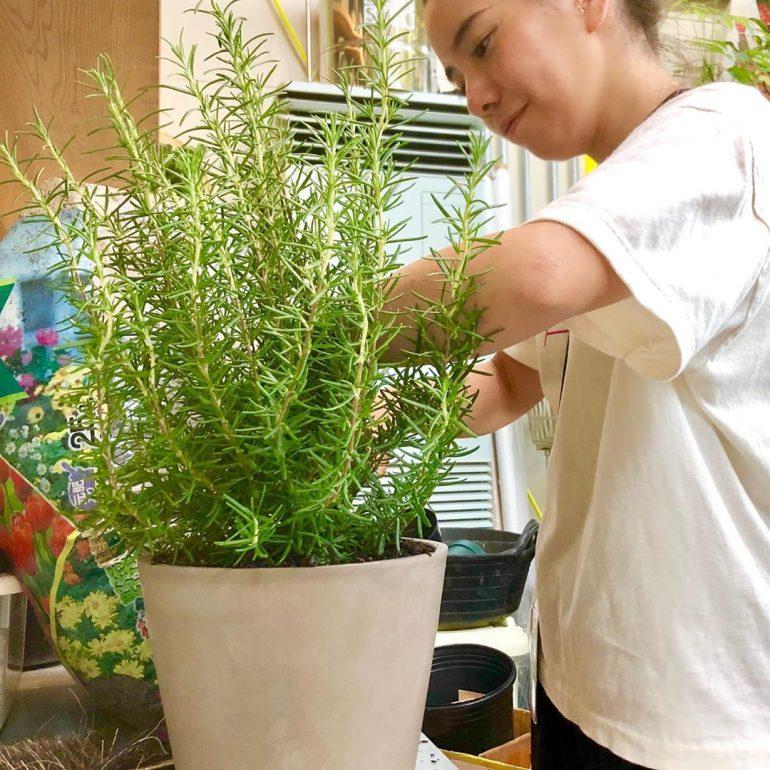 育てて食べよう!SOLSOに聞く植物とのおいしい暮らし