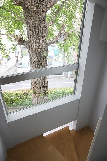 戸建て感覚の暮らしと窓越しのイチョウ