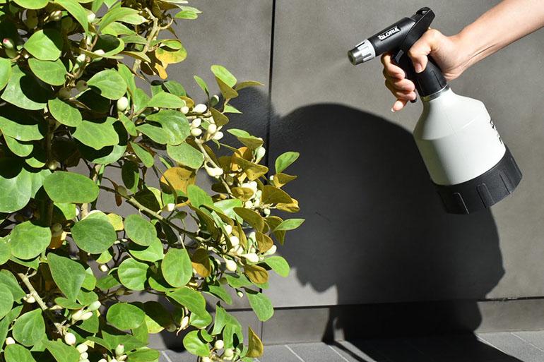 SOLSOに聞く、インドアグリーンを育てる基本の3ポイント