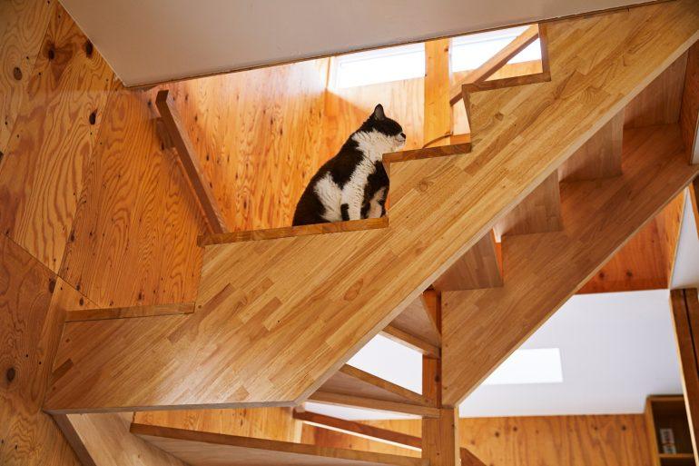 猫ちゃんが自由に走れる、開放感がある空間