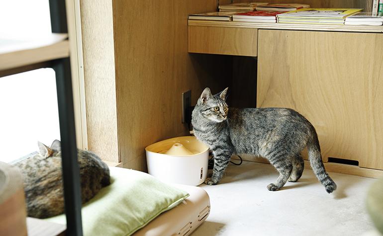 猫も人も心地よい住まいのつくり方